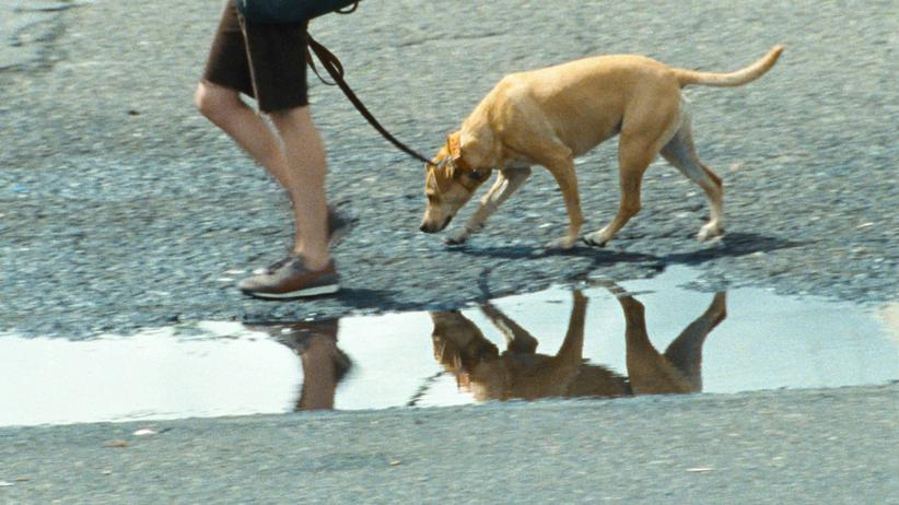 """DVD """"Wendy und Lucy"""": Frau sucht Hund"""