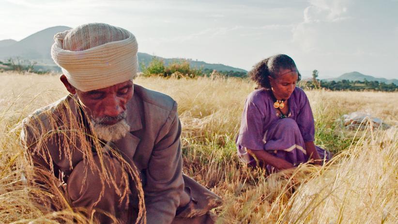 "Kultur, ""Landraub"", Filmrezension, Dokumentarfilm, Film, Agrarpolitik, Ernährung, Landwirtschaft"