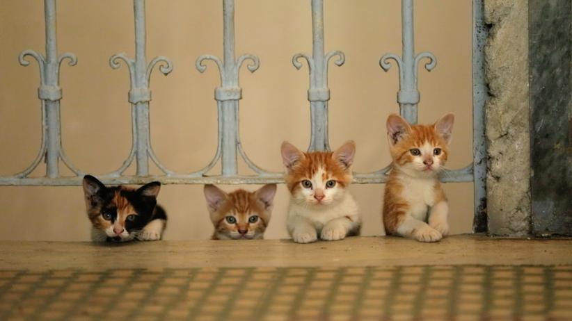 """""""Kedi – Von Katzen und Menschen"""": Okay, ja, die sind niedlich. Aber ist das ein Grund, sich schnurrend ausnutzen zu lassen?"""