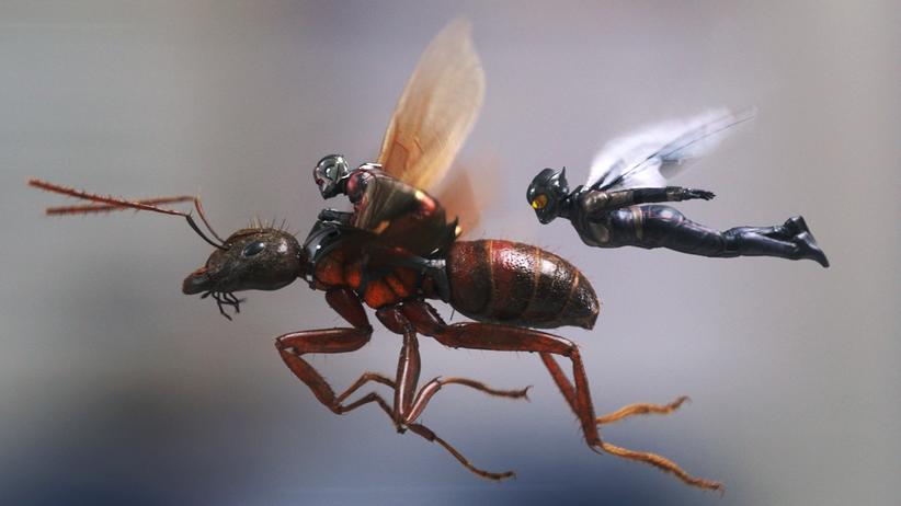 """""""Ant Man and the Wasp"""": Aufstieg der Nichtganzsosuperhelden"""
