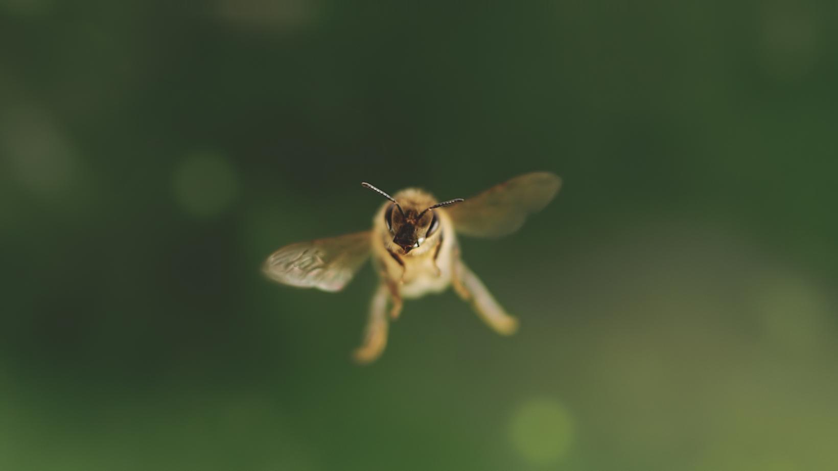 """""""Tagebuch einer Biene"""": Ich, die Biene"""