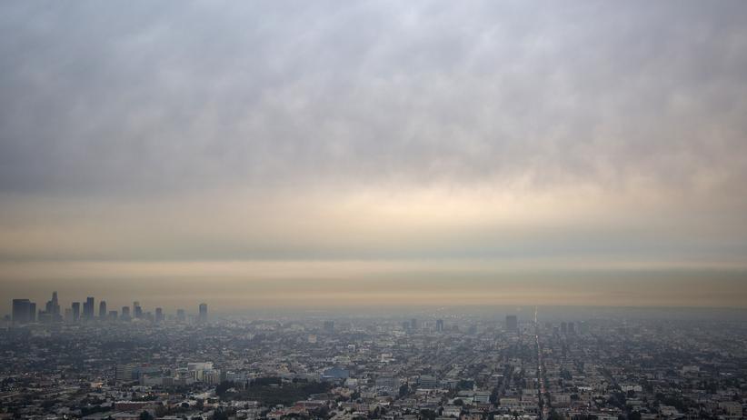 Kunstmarkt: Meistens ist es warm hier: Los Angeles im Januar