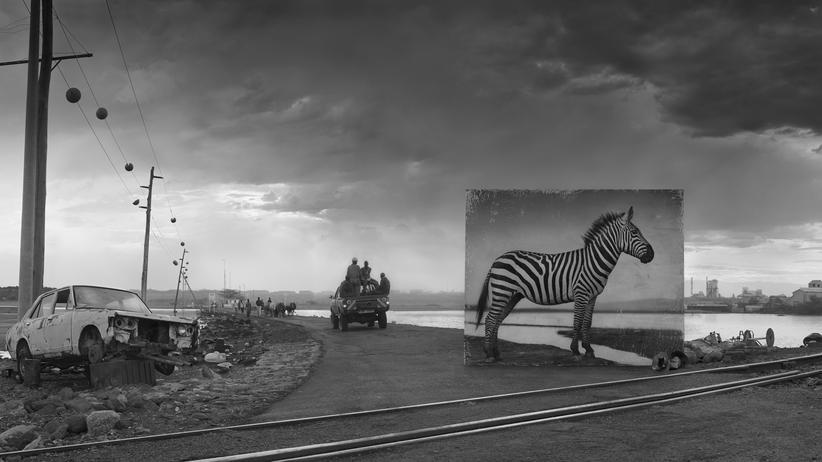 Naturfotografie: Zebra am Bahngleis