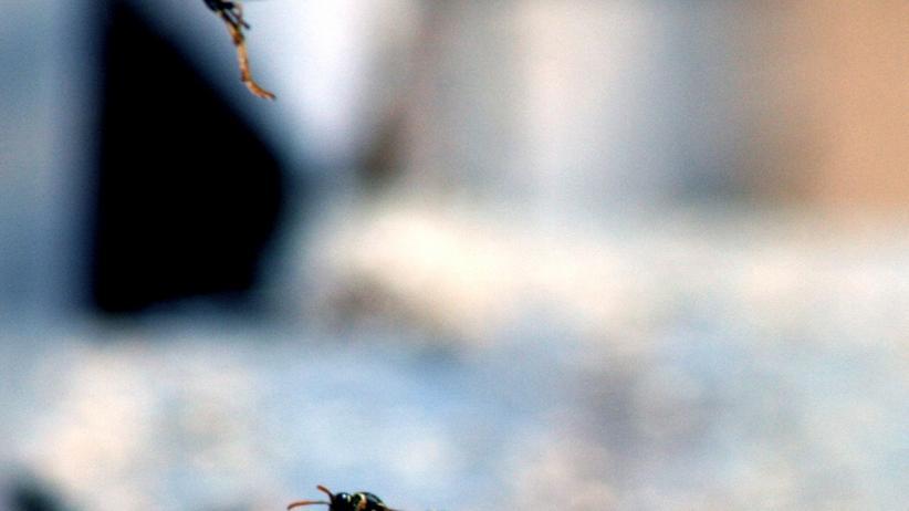 Antonio Negri: Schnulzen zum Kompott