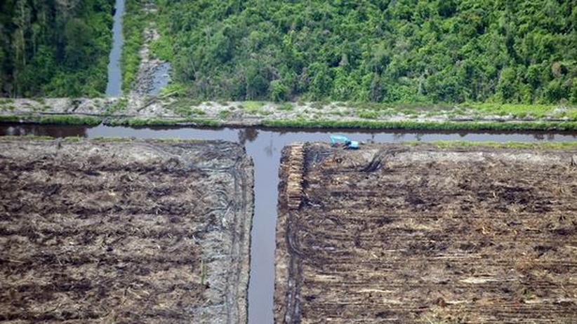 Bücher mit Biosiegel: Abholzung des Regenwaldes auf Sumatra