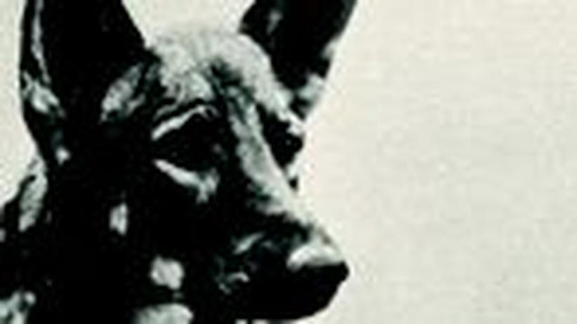 """Novelle """"Das hündische Herz"""": Lumpi und die Revolution"""