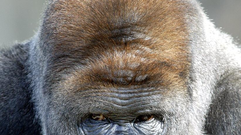 Psychologie: Tiere blicken dich an