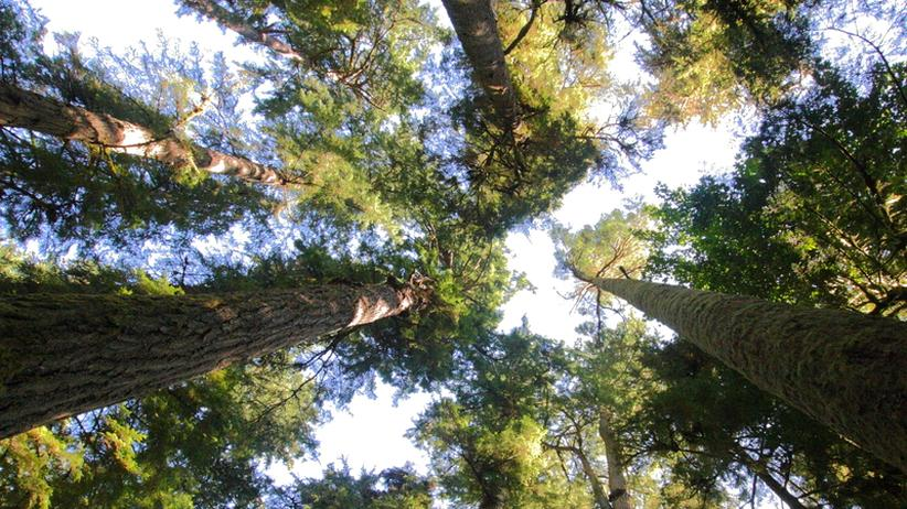 Nachhaltigkeit: Dieser Wald erscheint im Jahr 2114