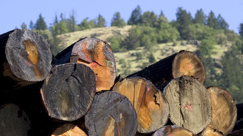"""""""Das geheime Leben der Bäume"""": Die Not am Stamm lindern"""