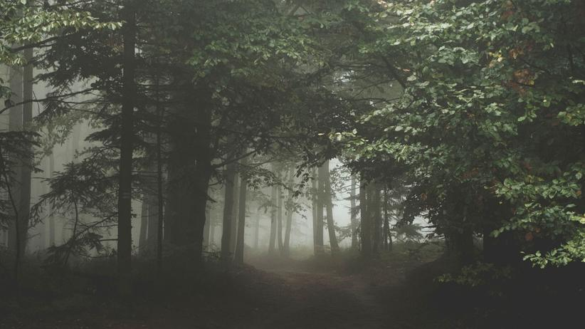 Wald Dämmerung Bedrohung Nebel