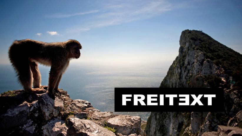 Gibraltar: Der Affe entscheidet