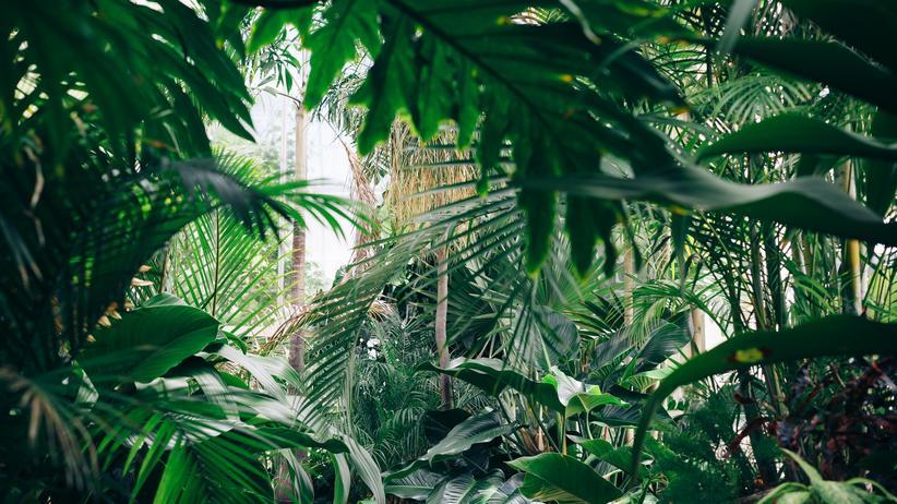 Pflanzen: Metaphysik der Mischung