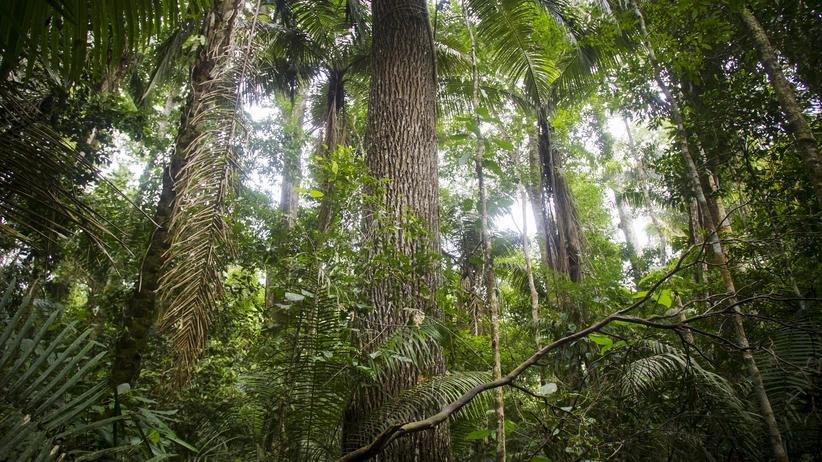 """""""Stromland"""": Im Dschungel der Utopie"""