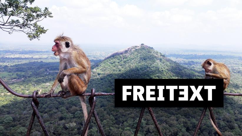 Sri Lanka: Und überall Rauschen