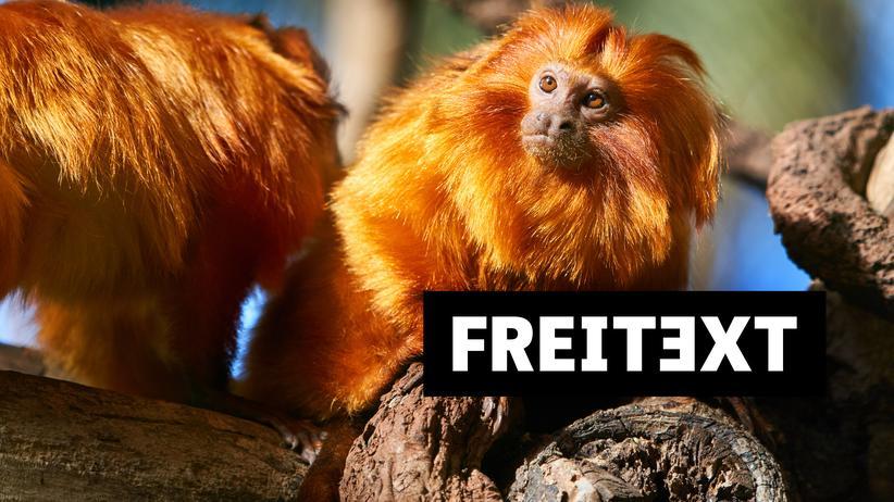 Zoo: Gefühlschaos zwischen Tieren