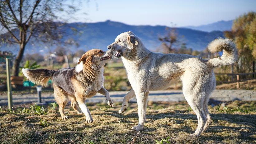 """""""Power"""": Zweifelsfrei Dorfhunde, keine Dorfkinder. In Verena Güntners neuem Roman ist das anders."""