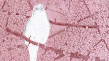 Wiegenlieder (46): Kommt gezogen, kleine Vögel