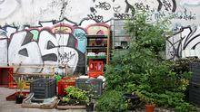 Gärtnern zwischen Graffitis: der Prinzessinnengarten liegt an einer lauten Kreuzung in Berlin-Kreuzberg