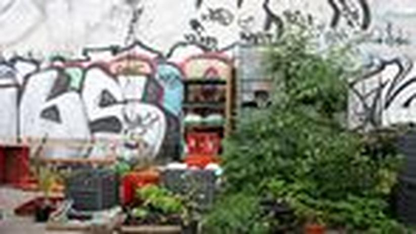 Großstadt-Gärten: Wenn Städter Wurzeln schlagen