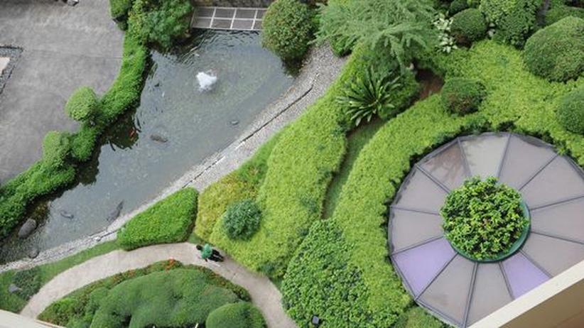 Dachgärten: Die kühlen Grünen
