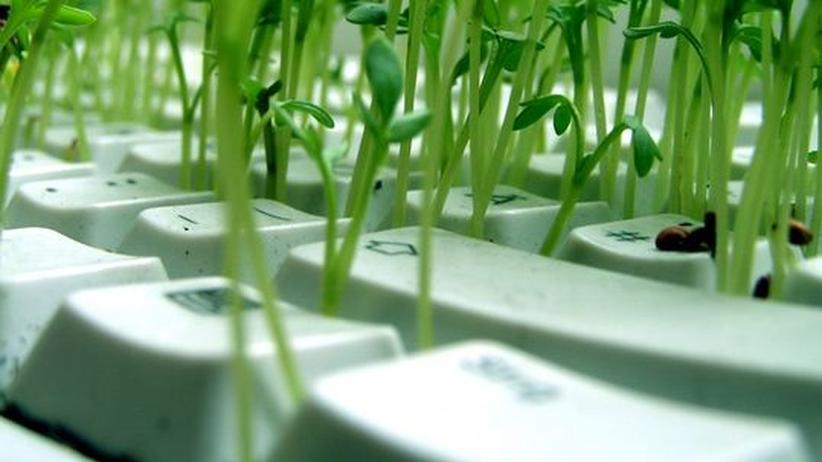Urban Gardening: Wer keinen grünen Daumen hat, findet im Netz zahlreiche Garten-Tipps.