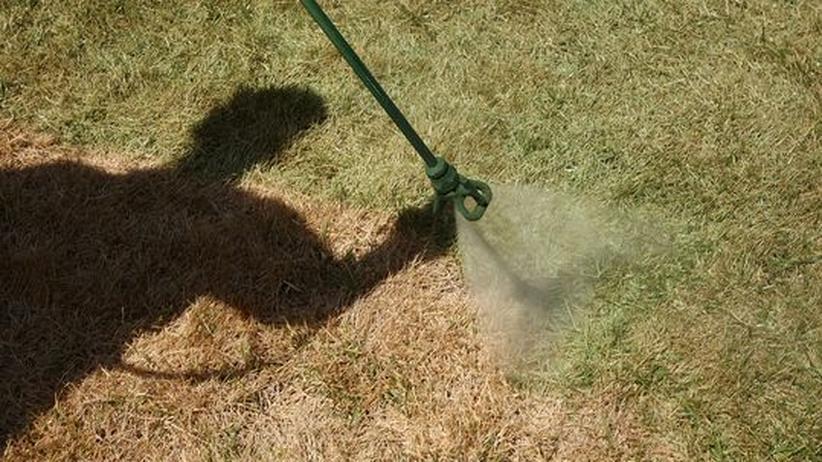 Ein Mitarbeiter der Firma Insta-Green färbt den Rasen eines kalifornischen Hauses mit umweltfreundlicher Farbe.