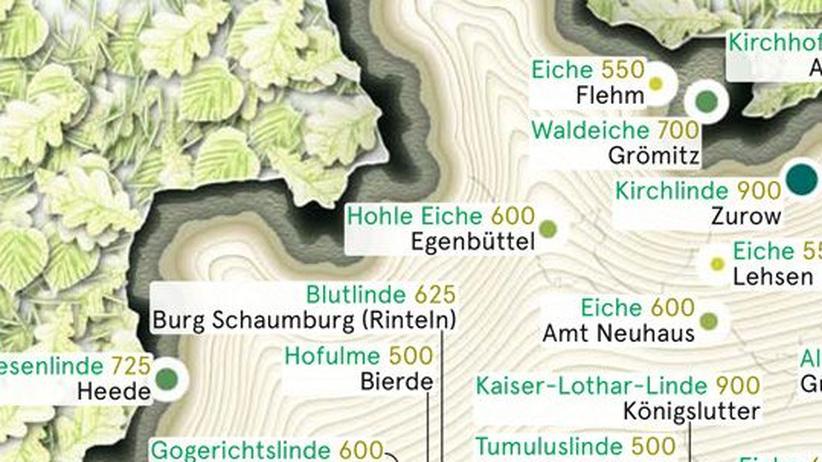 Deutschlandkarte: Die ältesten Bäume