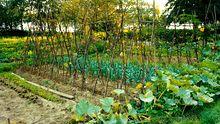 Gemüsegarten am See, Belfort 2004