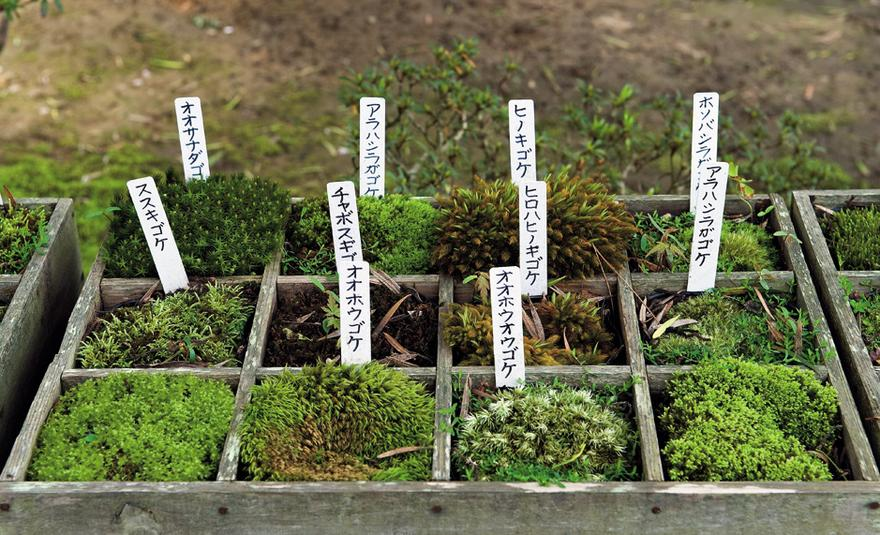 Japanische Gärten japanische gärten geometrie aus moos und blüten zeit