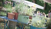 Gartengestaltung: Warum man auf eine Hecke verzichten sollte