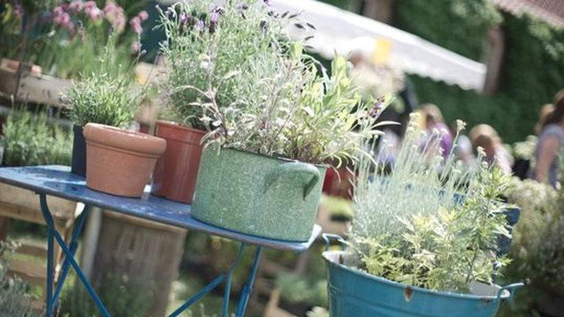Gartengestaltung: Eine neue Blütezeit