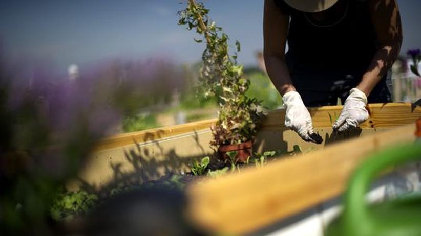 Gartengestaltung: Der Terror der Pflanzen