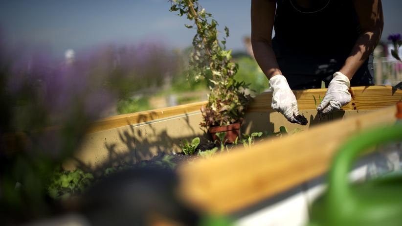 Gartengestaltung: Der Kampfplatz vor meiner Tür