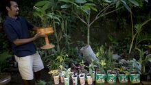 Rio de Janeiro: Ein Gemeinschaftsgarten in der Favela