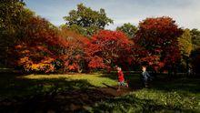 Kinder laufen durch das Westonbirt Arboretum in England.