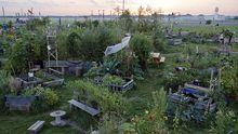 Urban Gardening: Kolonie der Wucherkisten