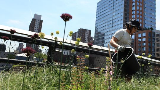 Beete im New Yorker High Line Park, die auf einer stillgelegten U-Bahn-Strecke angelegt wurden.