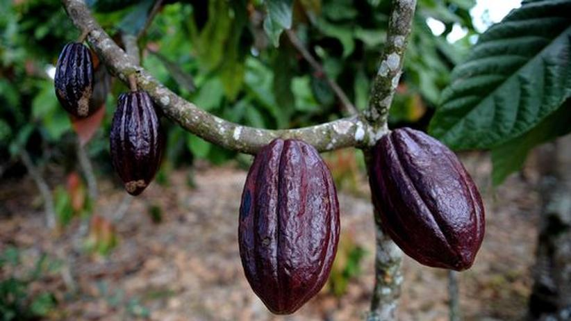 Weltmarkt: Heiße Schokolade
