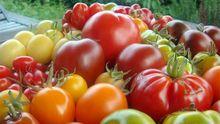 Rot, gelb, grün, flaschenförmig, fleischig oder kugelrund: Tomaten gibt es in unzähligen Variationen.