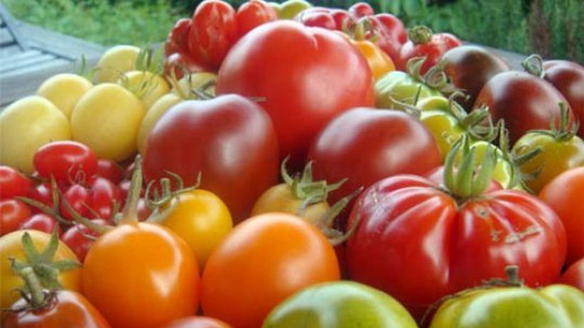 blogger henry steinbock der tomaten aficionado zeit online. Black Bedroom Furniture Sets. Home Design Ideas