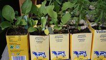 Urban Gardening: Kräuter ziehen im Tetrapak