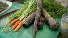 Violette Karotten machen Arbeit - sind aber schön.