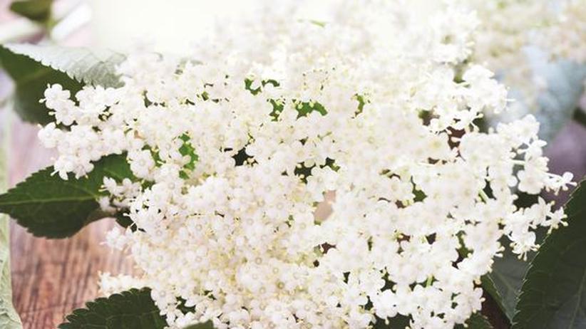 Wochenmarkt: Zarte Blüten und harter Stoff - daraus besteht der perfekte Sommerdrink