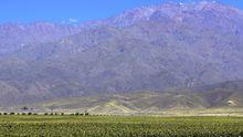 Weinberge in Mendoza, Argentinien