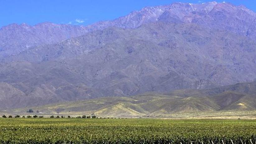 Die Ausleser: Der lange Schatten des argentinischen Weins