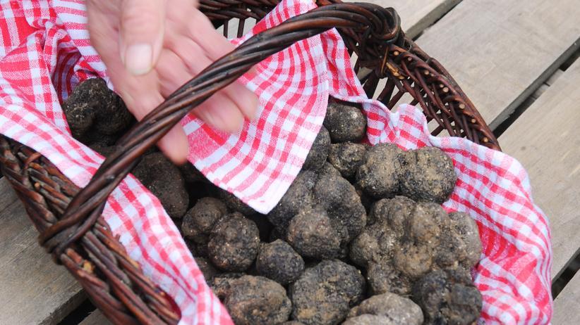 Trüffel: Edelpilze aus dem Schwarzwald