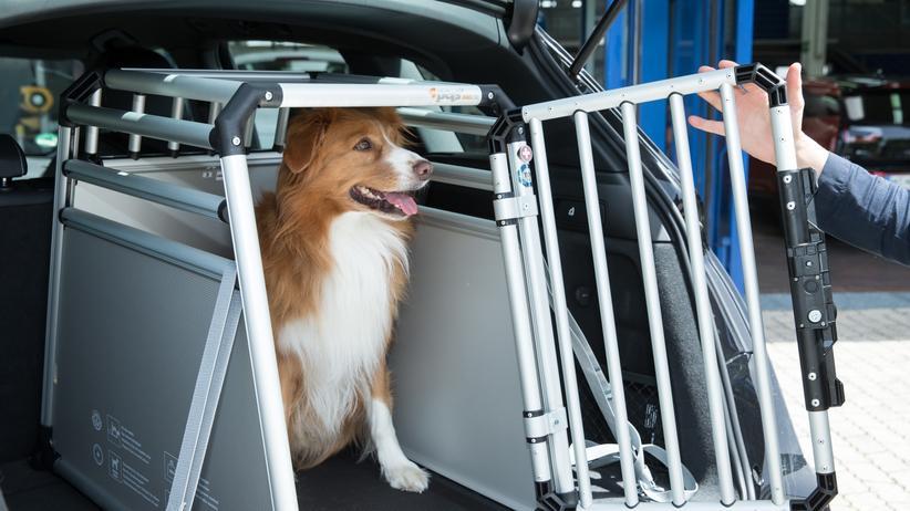 Tiertransport: Damit Rex nicht zum Flughund wird