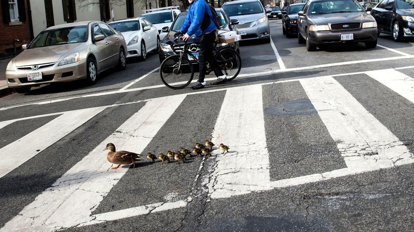 Fußgänger: Die Streifen der Welt