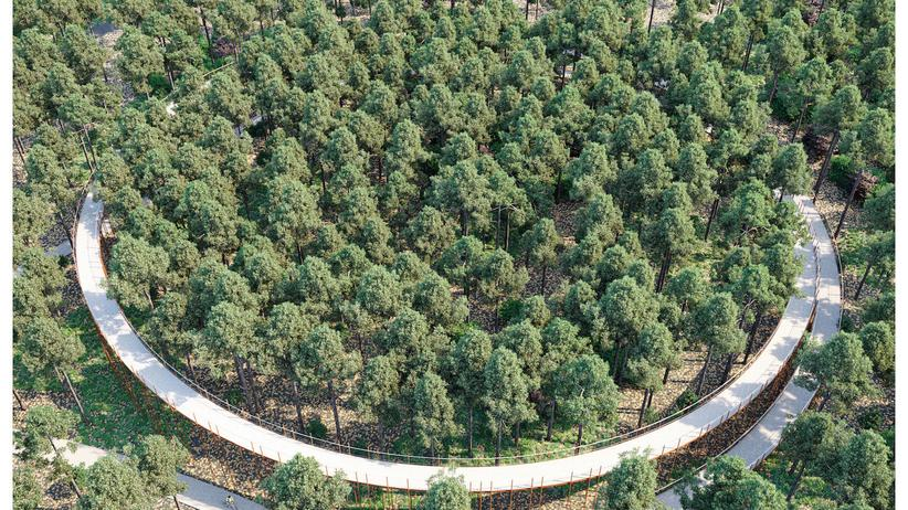 """""""Bicycle Architecture Biennale"""": In der Nähe des belgischen Limburgs kann man in zehn Meter Höhe durch die Baumwipfel radeln."""