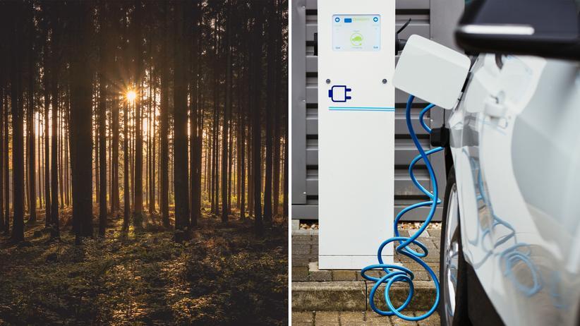 E-Mobilität: Der Wald der einsamen Ladesäulen